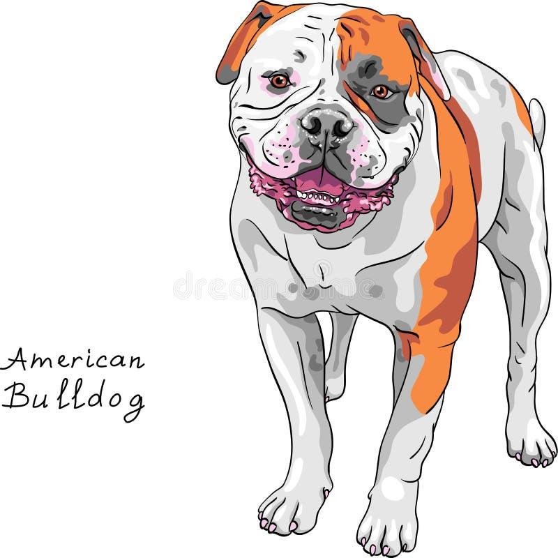 Razza americana del bulldog del cane di schizzo di vettore illustrazione di stock