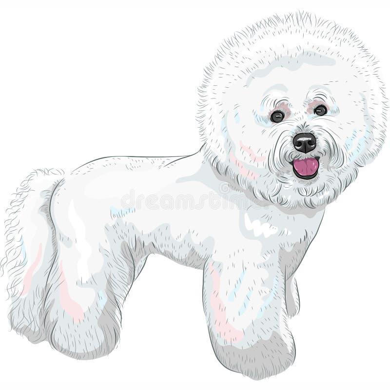 Razza sveglia bianca di Bichon Frise del cane di vettore royalty illustrazione gratis
