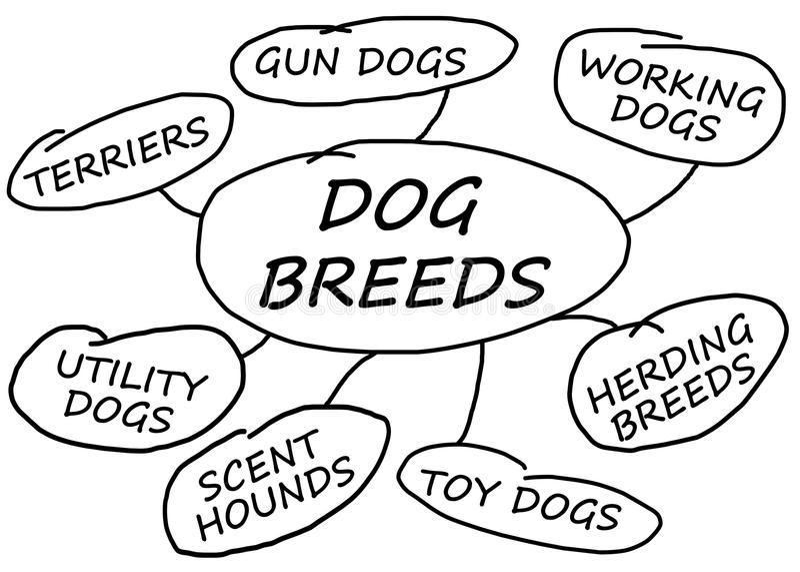 Razze del cane illustrazione di stock