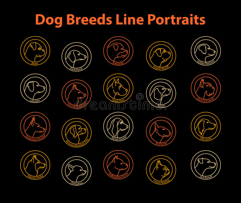 Razze del cane illustrazione vettoriale