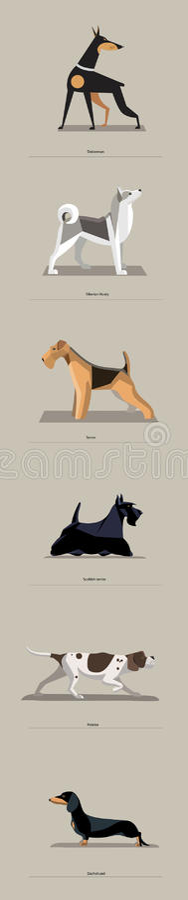 Razze del cane messe nello stile minimalista illustrazione di stock