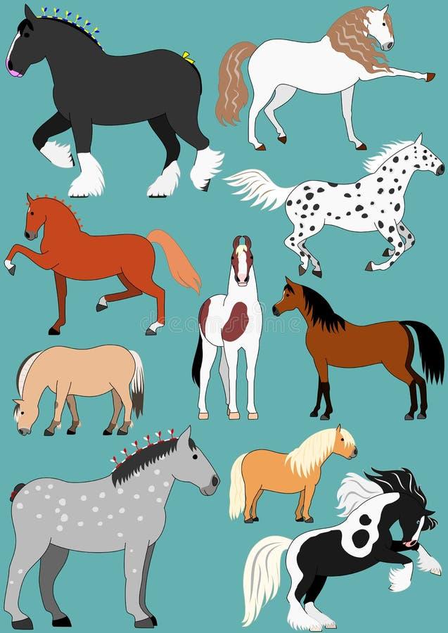 Razze del cavallo illustrazione di stock