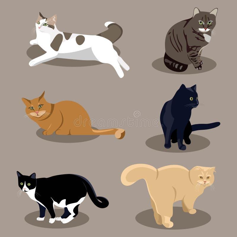 Razze differenti dei gatti nelle pose differenti illustrazione vettoriale