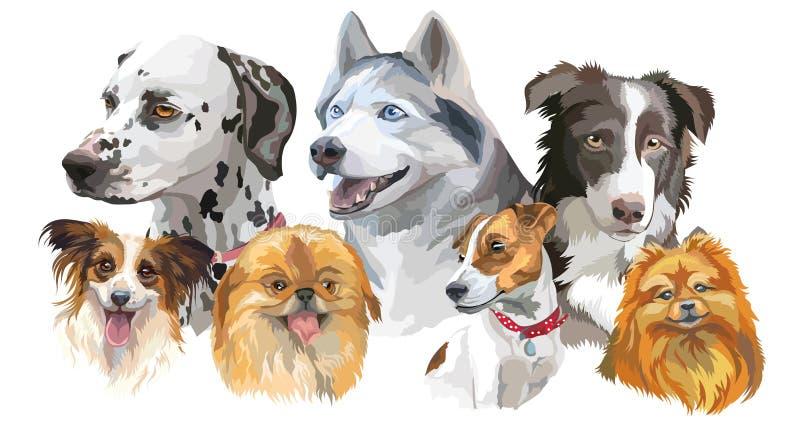 Razze differenti del cane messe illustrazione di stock