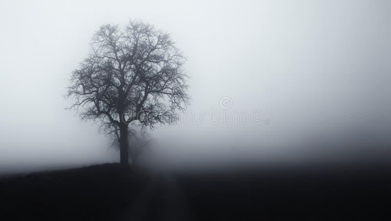 ?rbol aislado en la niebla rodeada por paisaje melanc?lico misterioso foto de archivo libre de regalías