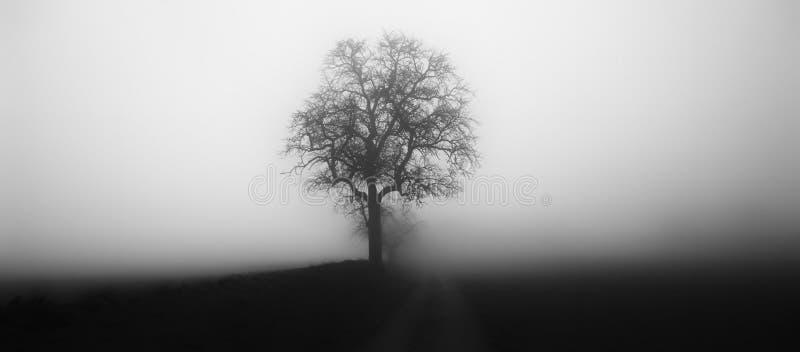?rbol aislado en la niebla rodeada por paisaje melanc?lico misterioso imagen de archivo libre de regalías