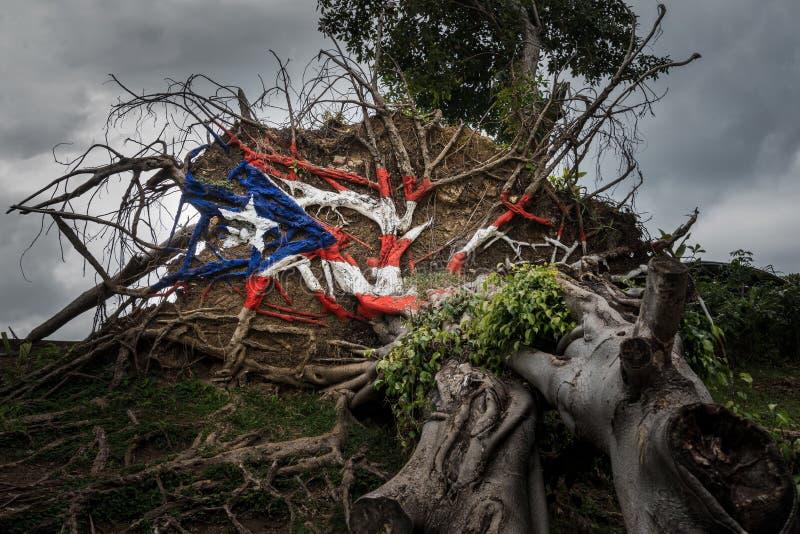?rbol caido del hurac?n Maria en San Juan imágenes de archivo libres de regalías
