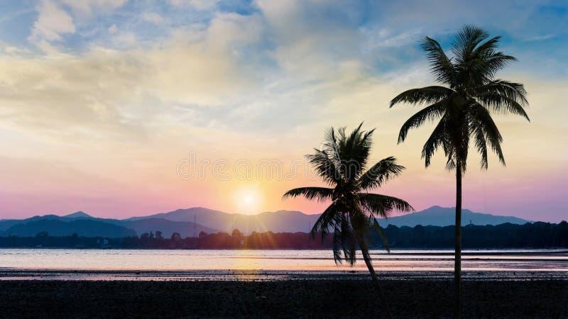 ?rbol de coco con puesta del sol fotografía de archivo