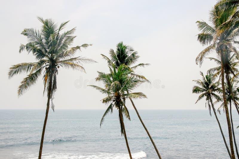 ?rbol de coco en cielo azul imágenes de archivo libres de regalías
