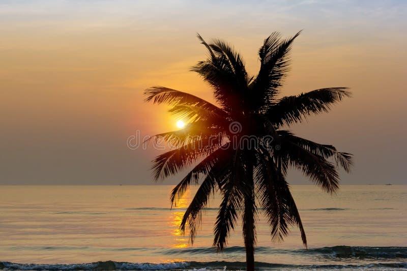?rbol de coco en la playa foto de archivo