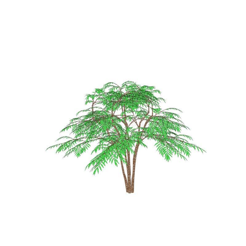 ?rbol de la aralia Aislado en el fondo blanco Ejemplo del bosquejo ilustración del vector