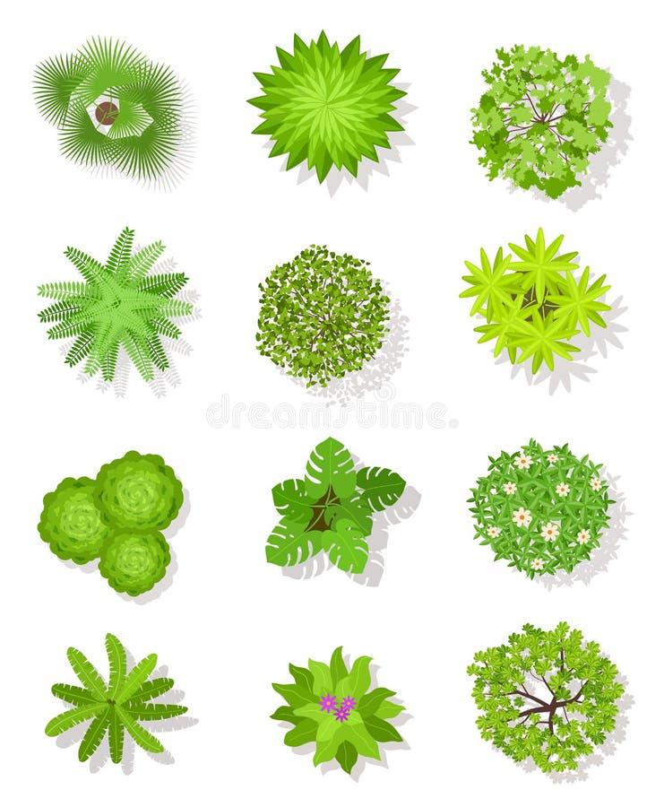 ?rbol de la visi?n superior Árboles verdes con las hojas y arbustos para el plan arquitectónico del paisaje Establecimiento de vi stock de ilustración