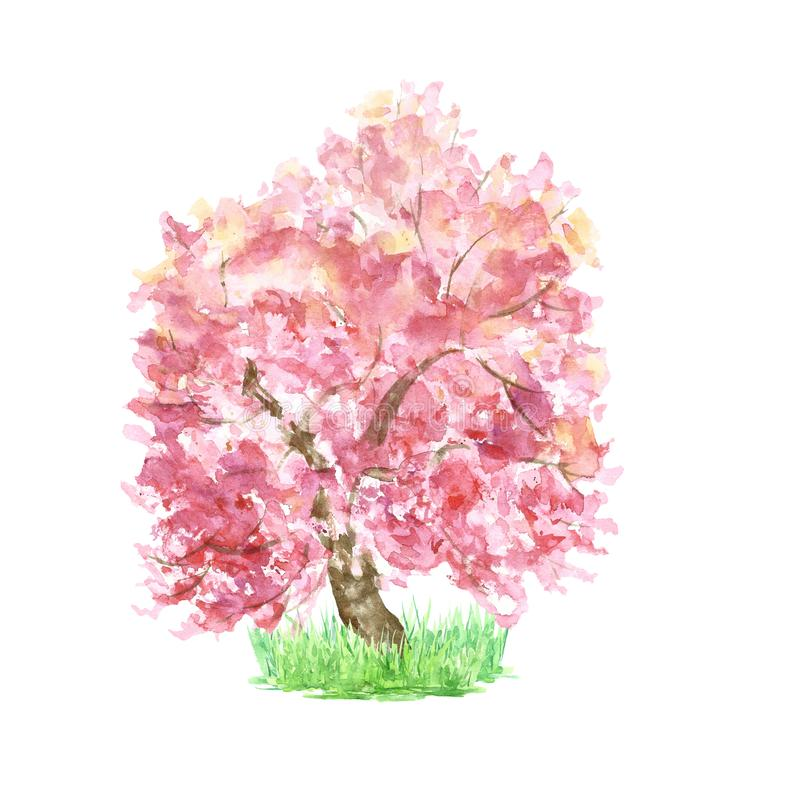 ?rbol de Sakura de la primavera de la acuarela en la hierba aislada Floraci?n rosada del cerezo Bosquejo bot?nico pintado a mano stock de ilustración