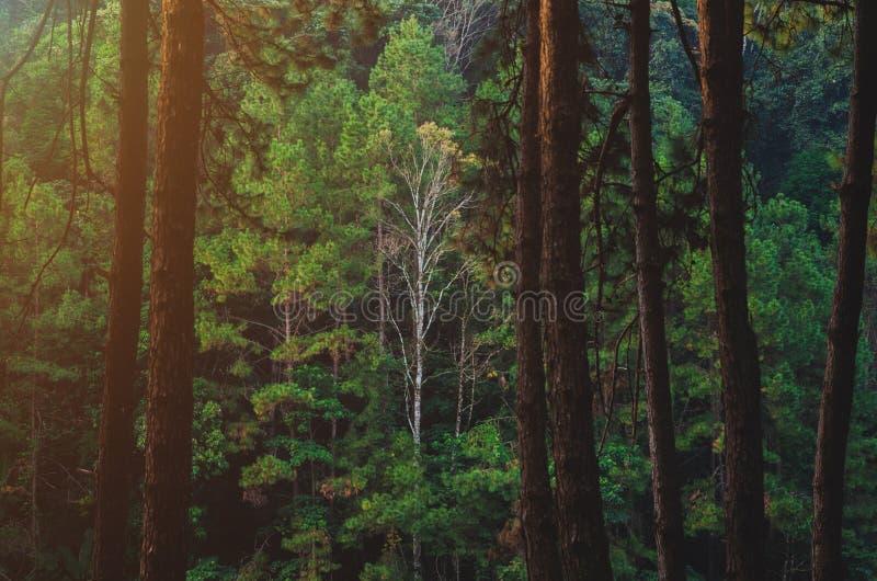 ?rbol grande en el bosque fotografía de archivo libre de regalías