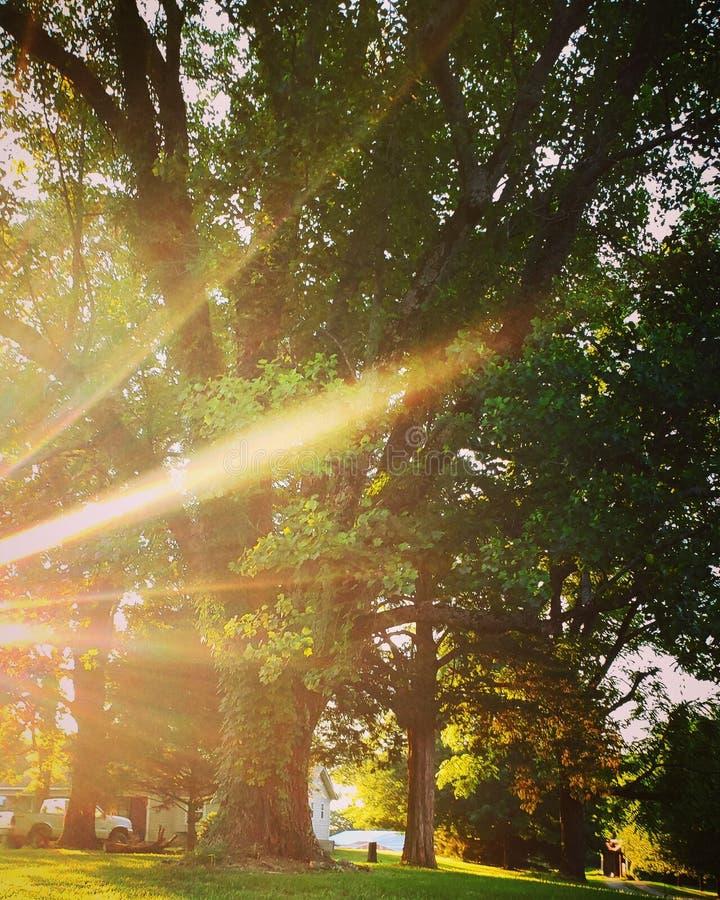 ?rbol iluminado por el sol imagenes de archivo