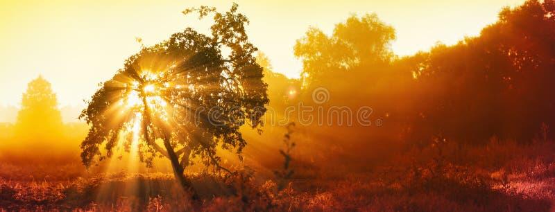?rbol m?gico con los rayos del sol por la ma?ana Paisaje colorido con el bosque de niebla, luz del sol del oro foto de archivo libre de regalías