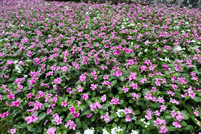 ?rbol, plantas, piedra del bosque y flores verdes hermosos en los jardines al aire libre y los parques p?blicos imágenes de archivo libres de regalías