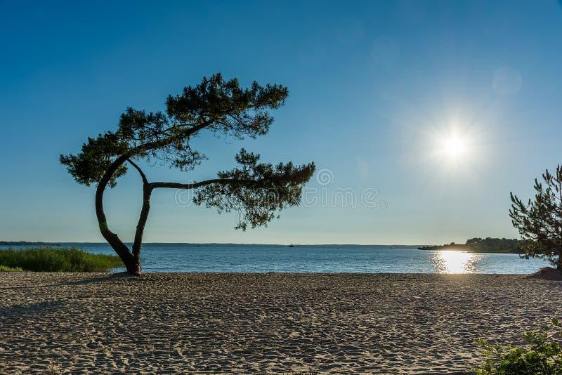 ?rbol solo en una playa arenosa Puesta del sol sobre el lago fotos de archivo