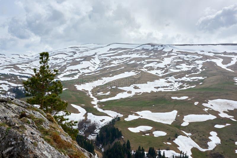 ?rbol solo sobre un acantilado en un fondo de monta?as coronadas de nieve fotografía de archivo