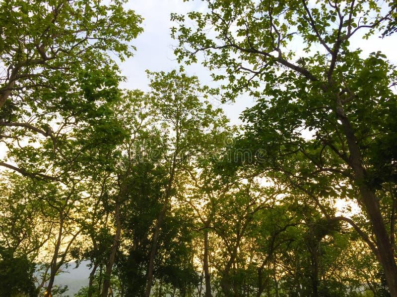 ?rbol verde en el parque imagen de archivo libre de regalías