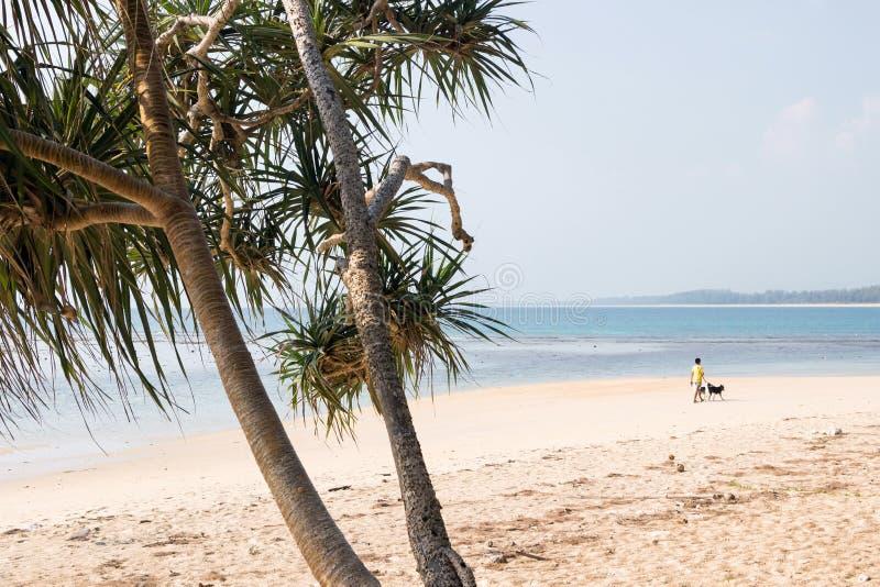 ?rboles en la playa del nai yang en Tailandia imagenes de archivo