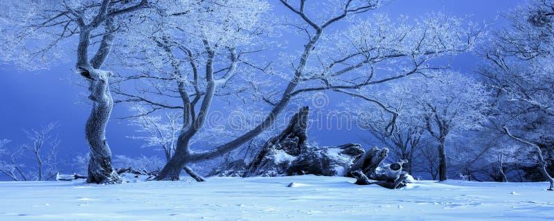 ?rboles viejos en la nieve fotos de archivo libres de regalías