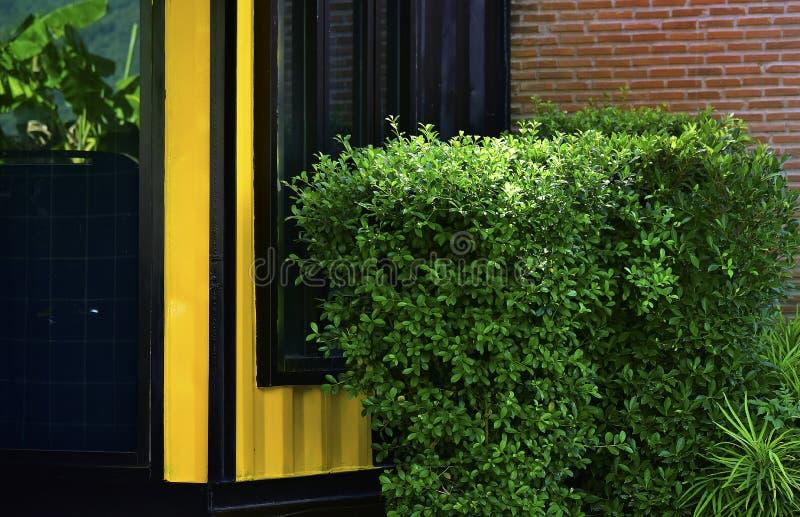 ?rboles y flores plantados como cerca delante de la casa fotografía de archivo