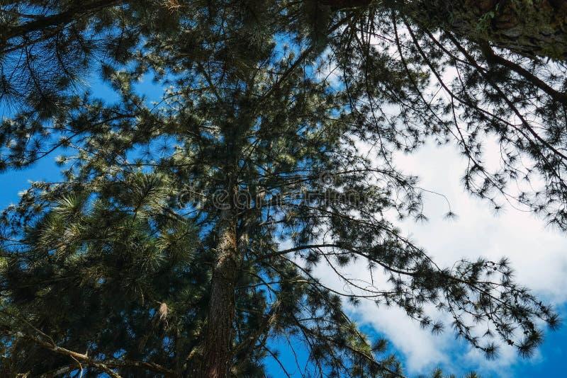 ?rboles y nubes imagen de archivo libre de regalías