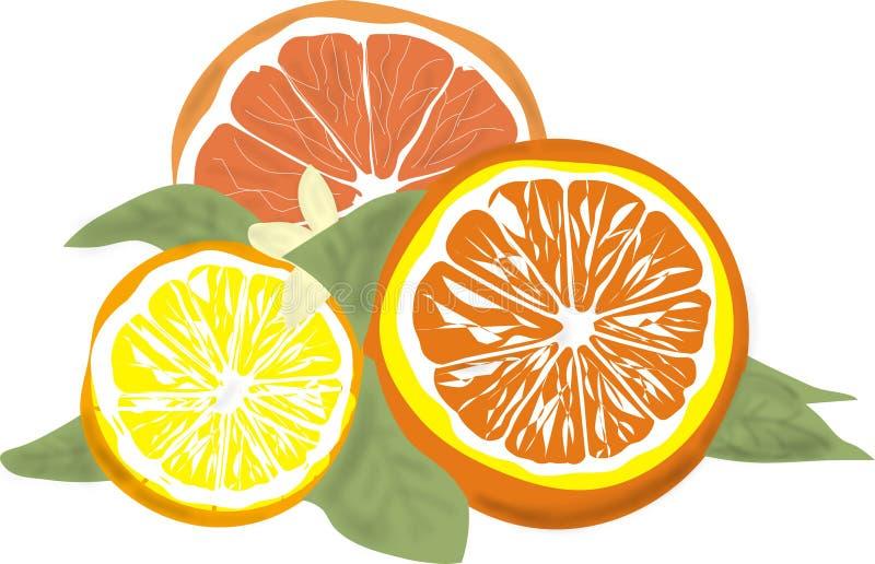 Rcitrus果子-桔子、葡萄柚和柠檬 向量例证
