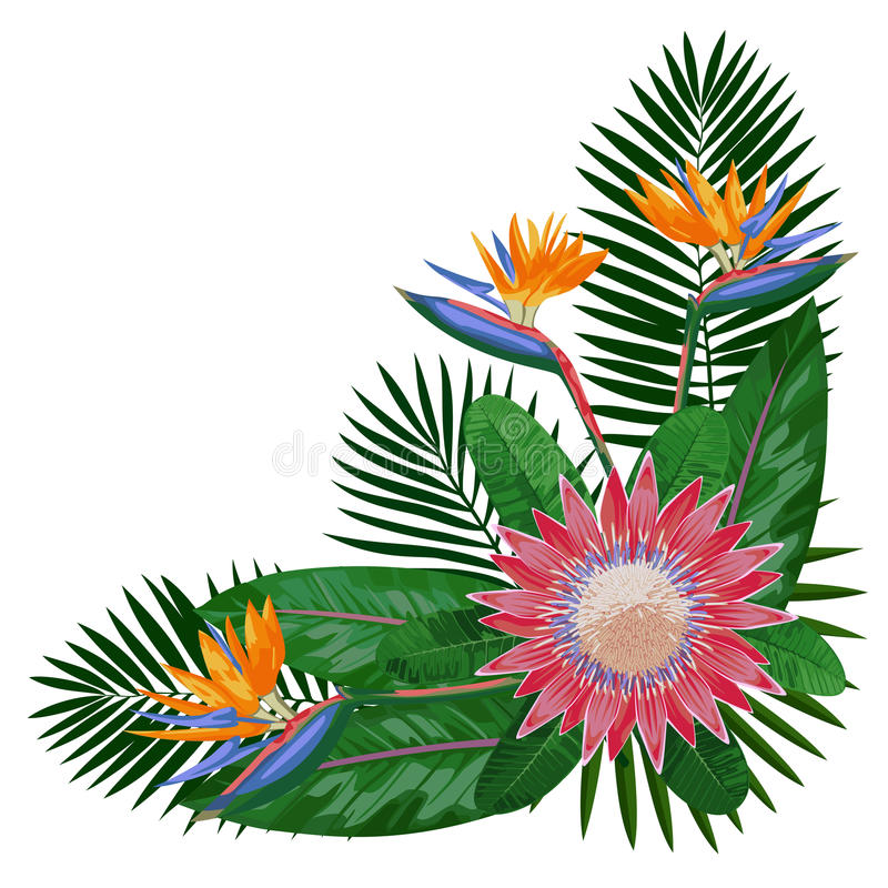 RComposition tropical de Corne de bouquet illustration stock