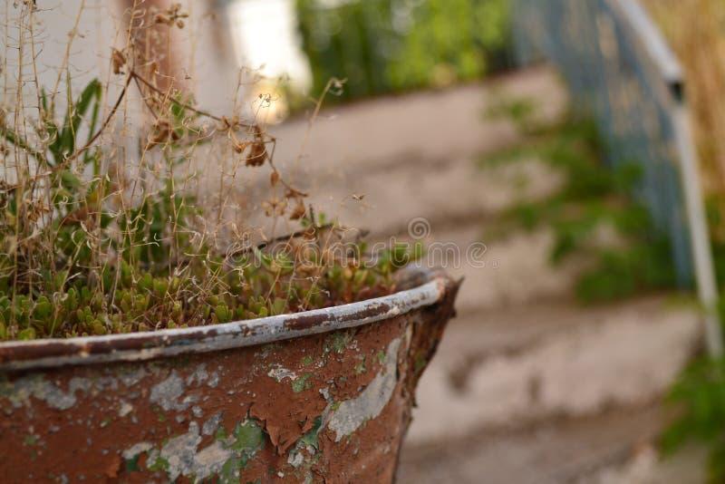 Rdzewiejący kwiatu garnek - zakończenie fotografia stock