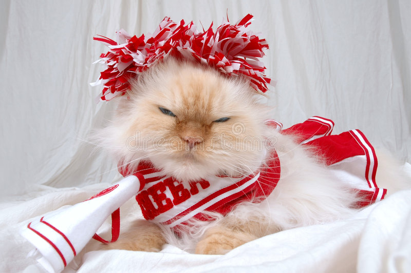 We're #1. Lexus the cat gives a look that her team is #1 and not yours! Dressed up like a cheerleader and ready to be your mascot. lexus royalty free stock images