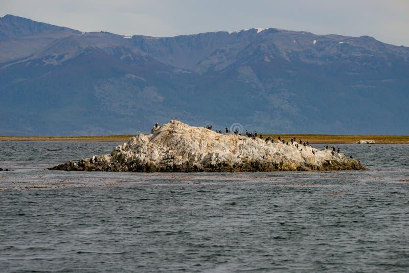 Re Cormorants e foreste e baie variopinte magiche di favola a Tierra del Fuego National Park, Manica del cane da lepre, Patagonia fotografia stock