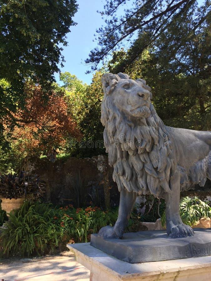Re del mondo animale - leone fotografie stock libere da diritti