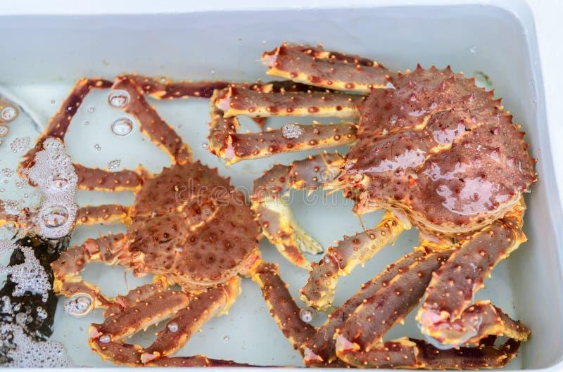 Re fresco Crab in acqua al mercato ittico fotografie stock libere da diritti