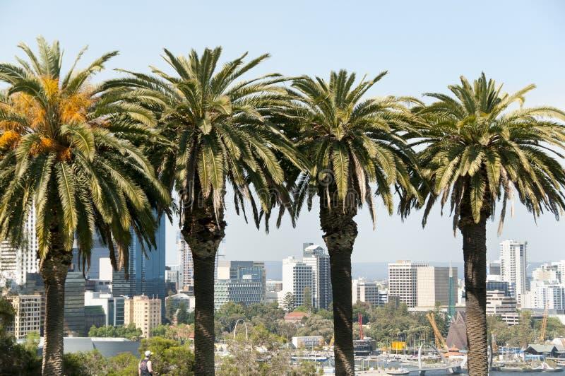 Re Park Palms - Perth - Australia fotografia stock