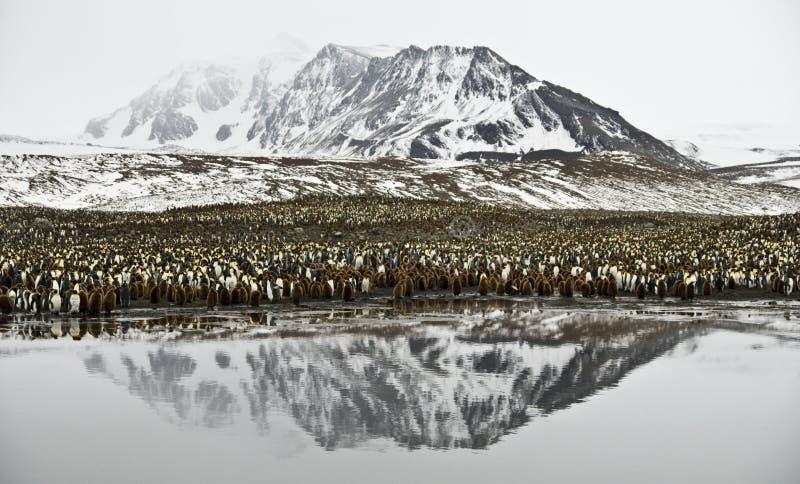 Re Penguin Colony e montagna riflesse immagine stock libera da diritti