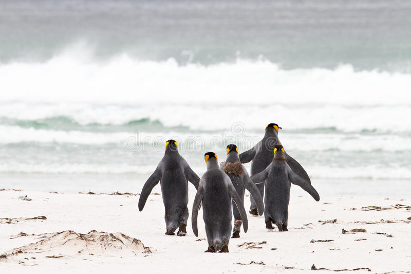 Re Penguins va per pescare immagini stock libere da diritti