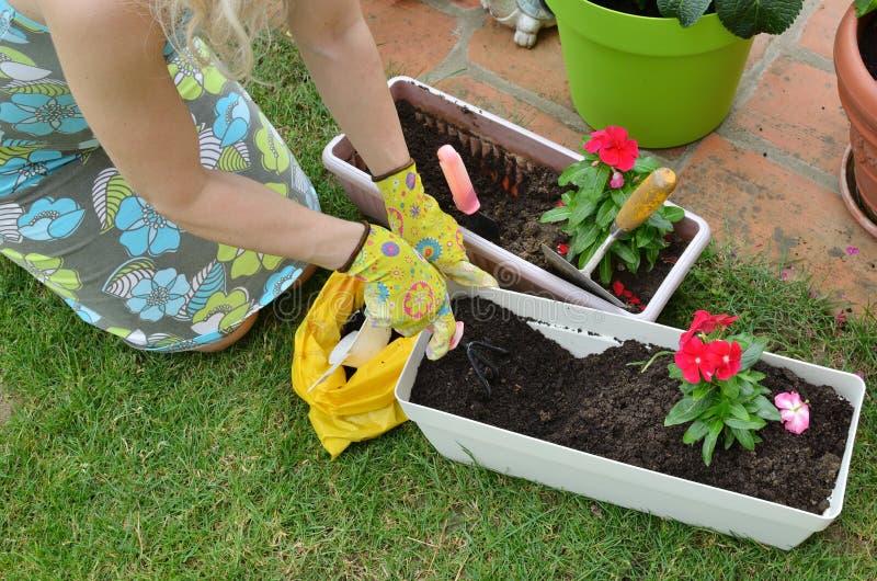 Re-potting in a garden royalty free stock photos