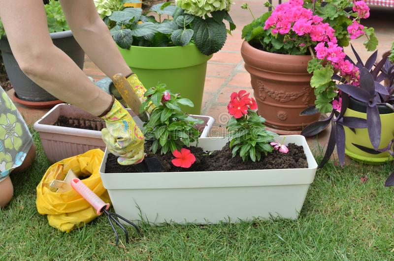 Re-potting in a garden stock photography