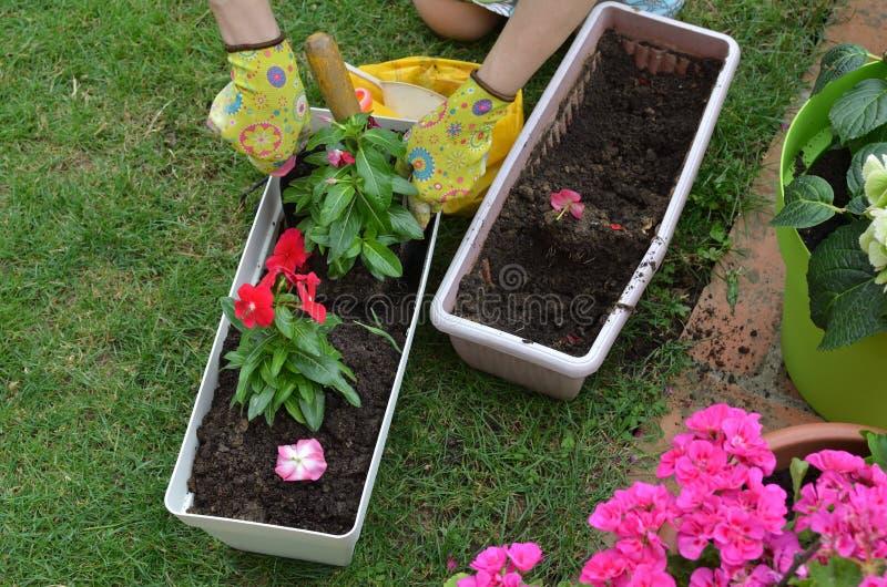 Re-potting in a garden stock photos