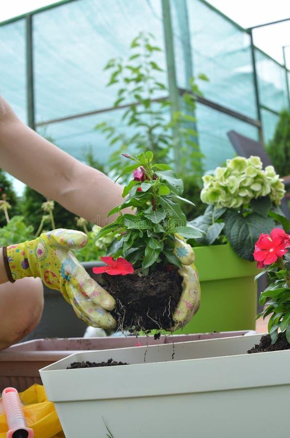 Re-potting in a lush garden royalty free stock photos