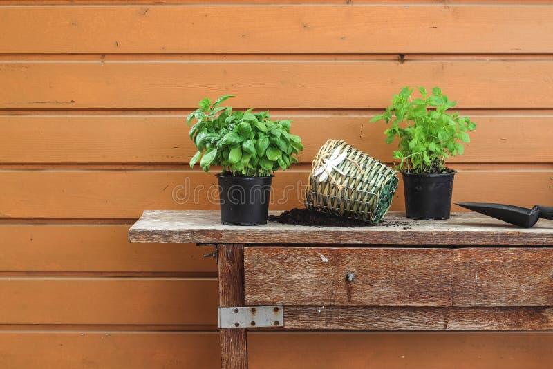 Re-pottingskruiden op een oude tuinlijst in de lente stock afbeelding