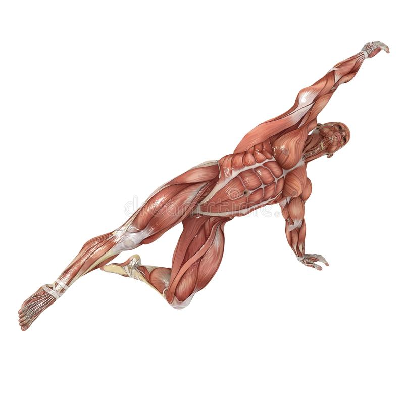 Reach. A male model showing the muscles and his flexibility stock illustration