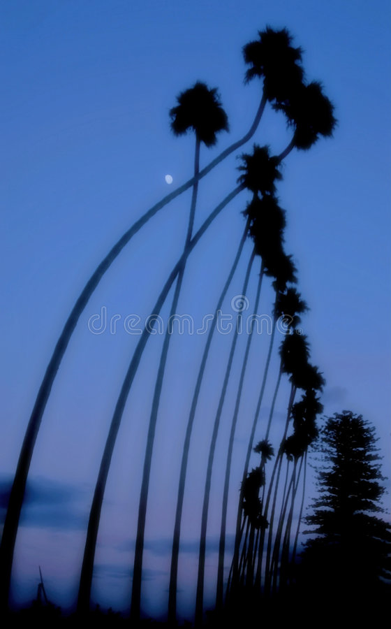 Download Reach for the Moon stock image. Image of curving, sunset - 78143