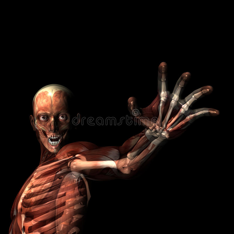Download Reach Out stock illustration. Image of biology, human - 24651008