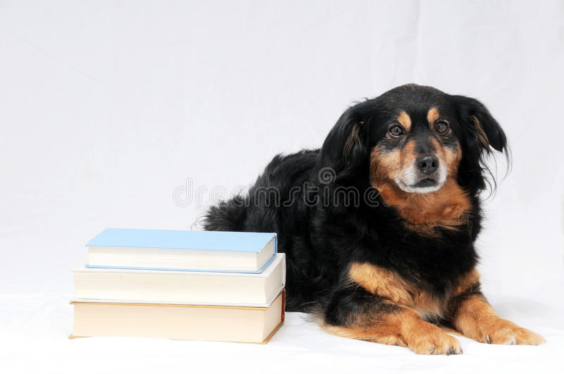 Reading Dog. One intelligent Black Dog Reading a Book on a White Background royalty free stock image