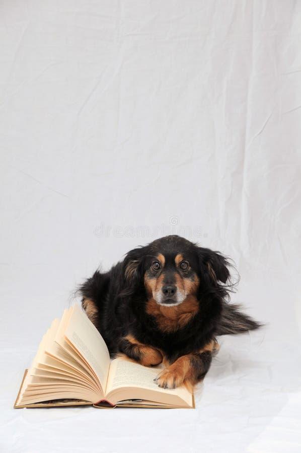 Reading Dog royalty free stock image