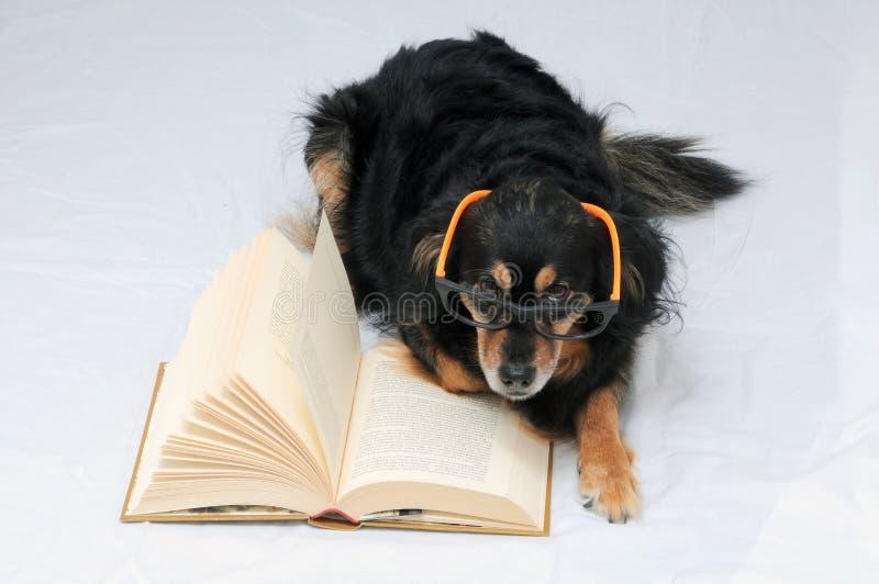 Reading Dog stock photography