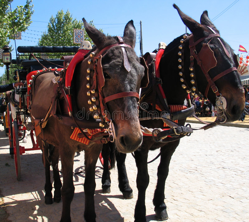 Download Ready carriage stock image. Image of horseman, song, andalucia - 112619
